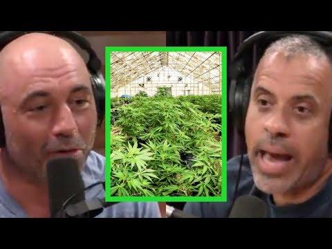 "Joe Rogan – Larry Sharpe ""Regulating Marijuana Means Big Business Wins"""